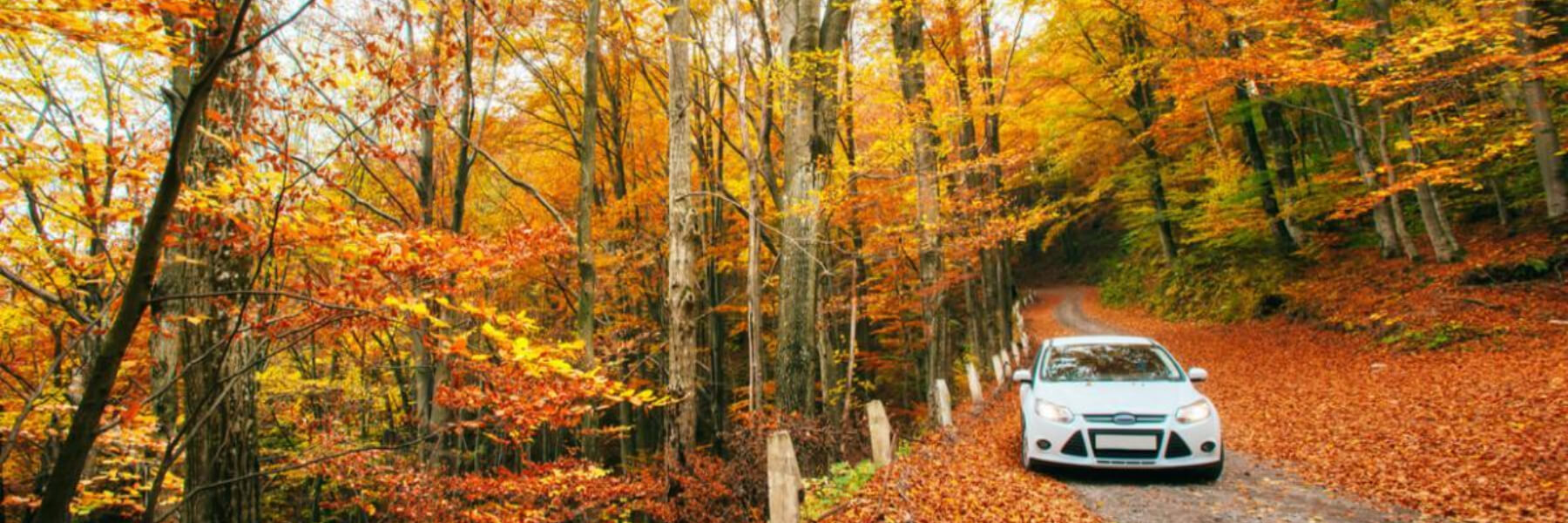 White car on a forest trail in fall leaves during autumn.